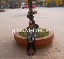 Gia sư Tiếng Anh cấp 2 tại quận Thanh Xuân