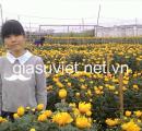 Gia sư giỏi môn Tiếng Anh và Tiểu Học tại Hà Nội